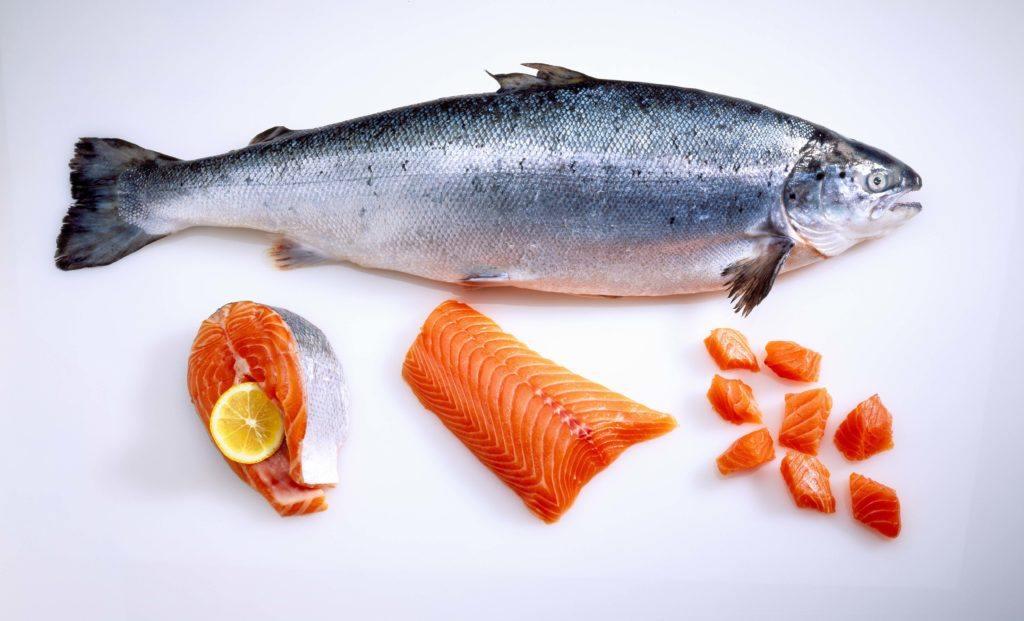 Ikan salmon dan potongan dagingnya.