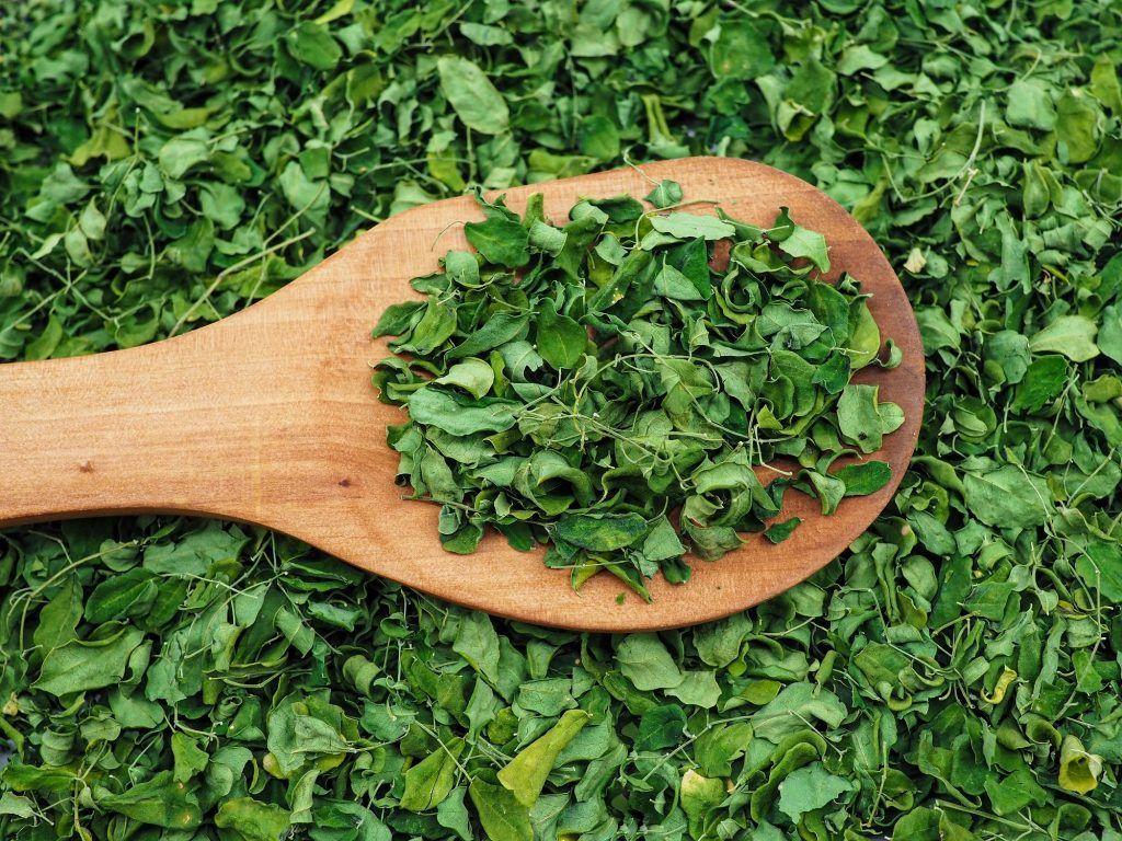 Manfaat daun kelor atau moringa kering di atas spatula kayu.