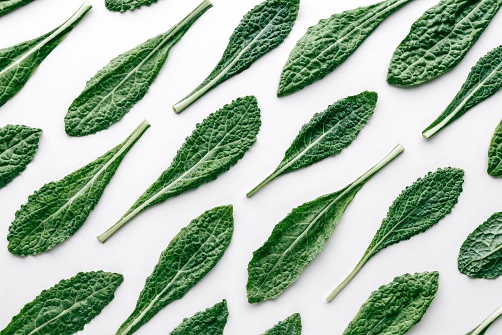 Berbagai lembaran daun kale dengan background putih.
